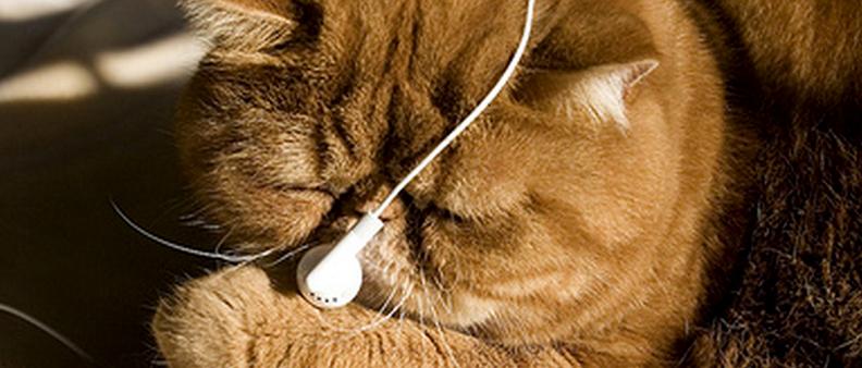 Musica per vecchi micini